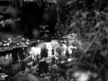 REIKO_IMOTO_Web_72dpi